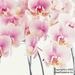 Flower2-004.JPG